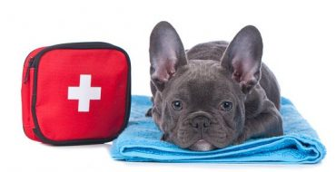 First-aid for pet owners